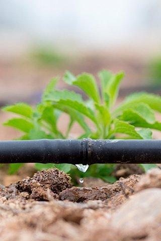 Sistema de riego por goteo en Eurocasa